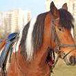 Horse on city background — Stock Photo #12393292