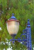 Straßenlampe vor grüne Tanne — Stockfoto