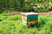 Honey bee hives in spring garden — Stock Photo