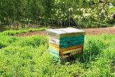 Honey bee hives in spring garden — Stock Photo