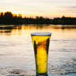 Cold beer in nature — Stock Photo