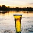 Cold beer in nature — Foto de Stock