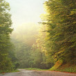 Road in forest — Stock Photo #12806402