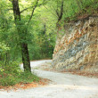 Road in forest — Stock Photo #12891791