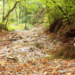 Stock Photo: Stream in mountain forest