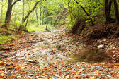 Stream in the mountain forest — Stock Photo
