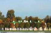 Stromy v podzimním parku — Stock fotografie