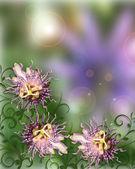 Resumen de flores de pasión — Foto de Stock