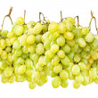 Ripe green grapes hanging against white — Foto Stock