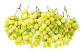 Ripe green grapes hanging against white — Stock Photo