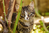 Little kitten outdoors — Stock Photo