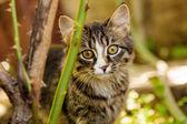 Little kitten outdoors — Stockfoto