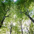 Forest trees — Stock Photo #12427259