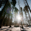 Sunset in a winter forest - Stock Photo