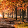 Autumn in the park — Stock Photo #13491191
