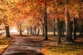Autumn in the park — Stockfoto