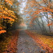 autumn road — Stock Photo #14032445