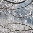 Frozen branches - Stock Photo