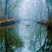 Pântano enevoado — Foto Stock
