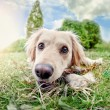 Cute Dog — Stock Photo #22895076