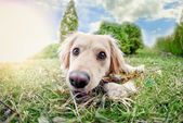 Cute Dog — Stock Photo