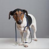 Help Me I'm A Sick dog — Stock Photo