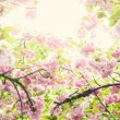 Stock Photo: Blossom
