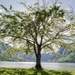 One tree — Stockfoto #28749163