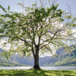 Stock Photo: One tree