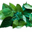 Leaves — Stock Photo #28749775