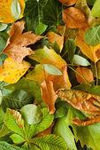 Leaves autumn background — Stock Photo