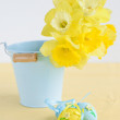 Bouquet of yellow lent lily (daffodil) in blue bucket — Stock Photo #28757069