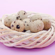 Quail eggs in the nest — Stock Photo