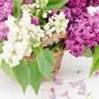 Lovely lilac in a basket — Stock Photo