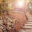 Autumn in the forest — Stock Photo
