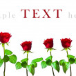 Six red roses on white background with space for text — Stock Photo