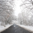 Winter road and trees covered with snow — Stock Photo
