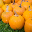 Pumpkins — Stock Photo #28776707