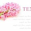 Beautiful spring flower, hyacinth card for your text — Stock Photo #28778475