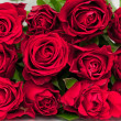 Roses Bunch — Stockfoto
