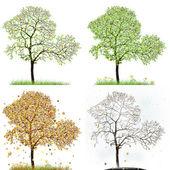 Four season trees — Stock Photo