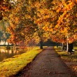Colorful foliage in the autumn park — Stock Photo