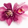 Orchids over white background — Stock Photo