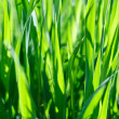 Green grass background — Stock Photo #28781363