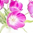 Fresh pink tulips — Stock Photo #28781483