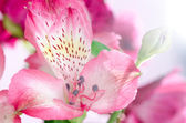 Beautiful pink orchid against white background — Stock Photo