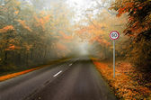 A curving autumn road — Stock Photo