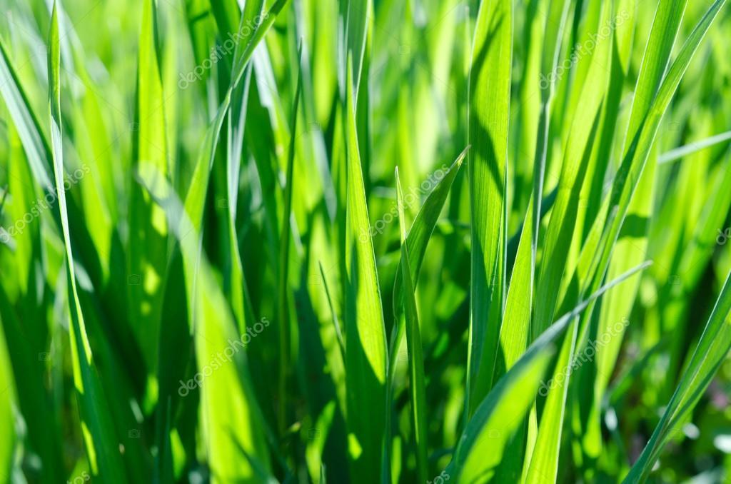 壁纸 草 成片种植 风景 绿色 植物 种植基地 桌面 1024_678