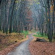 Pathway through autumn forest — Stock Photo #29633793