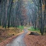 Pathway through the autumn forest — Stock Photo